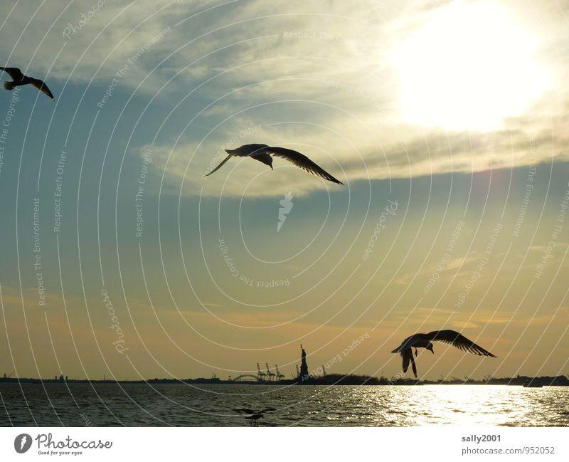 fliegen zur Freiheit... Schönes Wetter Meer Atlantik Hudson River New York City USA Amerika Hafenstadt Sehenswürdigkeit Wahrzeichen Denkmal Freiheitsstatue Tier