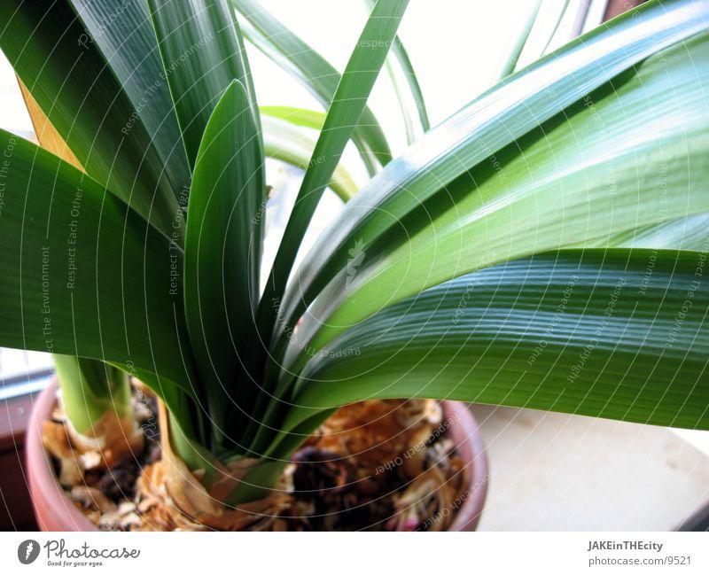 pflanz_mir_einen_#2 Blatt Pflanze Balkonpflanze Zimmerpflanze Wurzel Erde grüne Blätter Blumenkübel Pflanzenkübel
