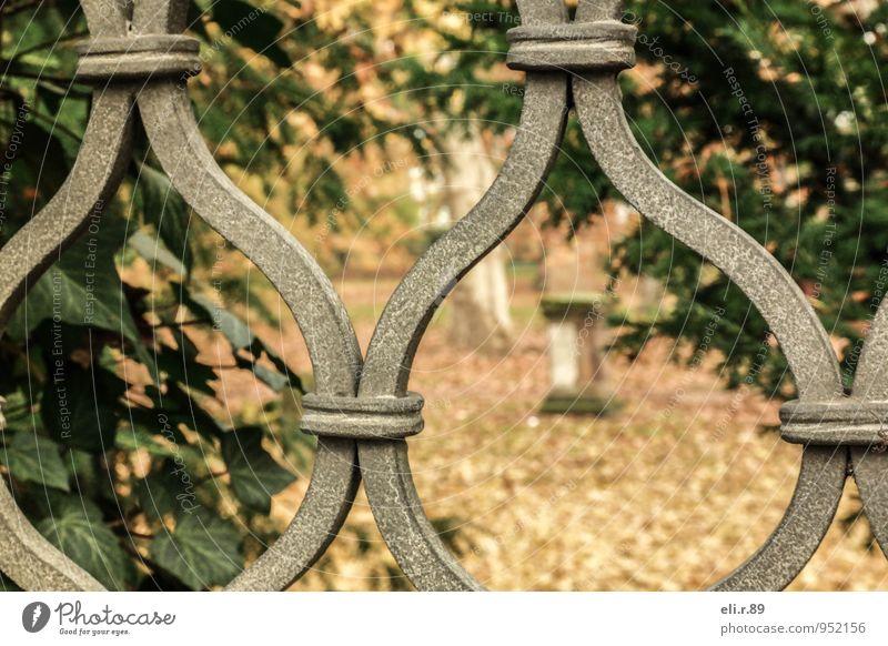 Durchblick Natur alt schön grün Baum Einsamkeit ruhig Herbst braun Stimmung Metall Park gold Trauer Sehnsucht Efeu