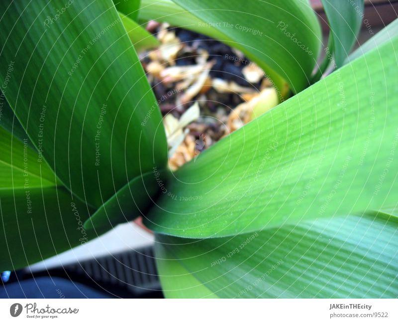 pflanz_mir_einen_#1 Blatt Pflanze Balkonpflanze Zimmerpflanze Wurzel Erde grüne Blätter