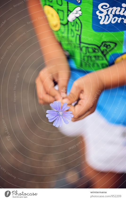 LÄCHELN! Kind Junge Hand Finger 1 Mensch 3-8 Jahre Kindheit T-Shirt Glück Macht Geborgenheit Warmherzigkeit Liebe Duft Erholung Gelassenheit Farbfoto