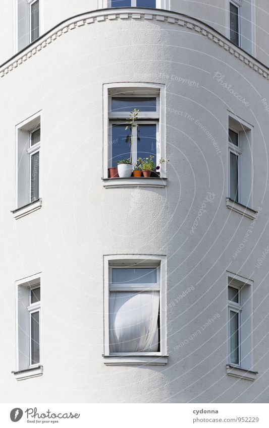 Frischer Wind Lifestyle Häusliches Leben Wohnung Dekoration & Verzierung Frühling Grünpflanze Altstadt Haus Architektur Fassade Fenster Beratung Idee Stadt