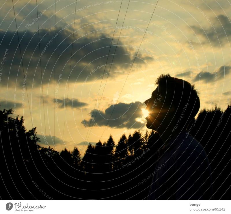 Marc is(s)t die Sonne Sonnenuntergang dunkel Dämmerung Wolken Silhouette Baum Wald Hintergrundbild Horizont Mann Sonnenstrahlen Kabel Himmel Macht dämmern