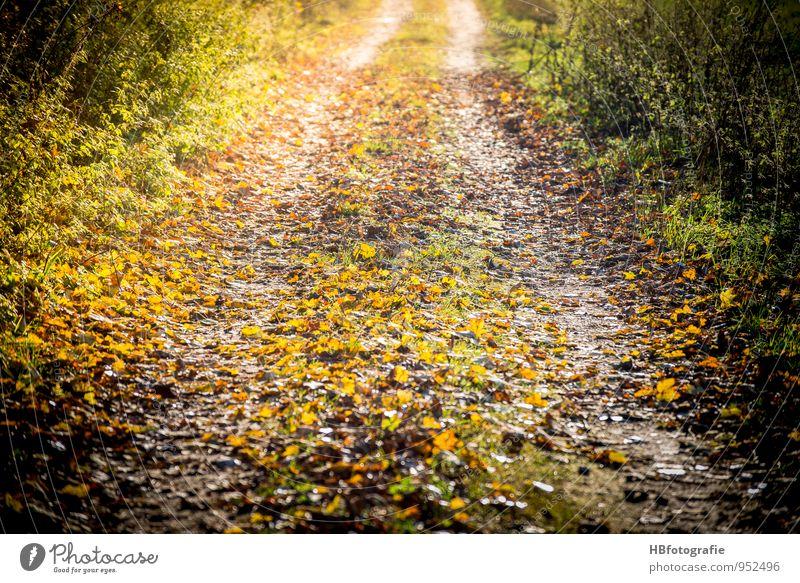 Weg nach Irgendwo Umwelt Natur Landschaft Sonne Sonnenlicht Herbst Schönes Wetter Grünpflanze Wald Bewegung laufen gelb gold Gefühle Lebensfreude Mut