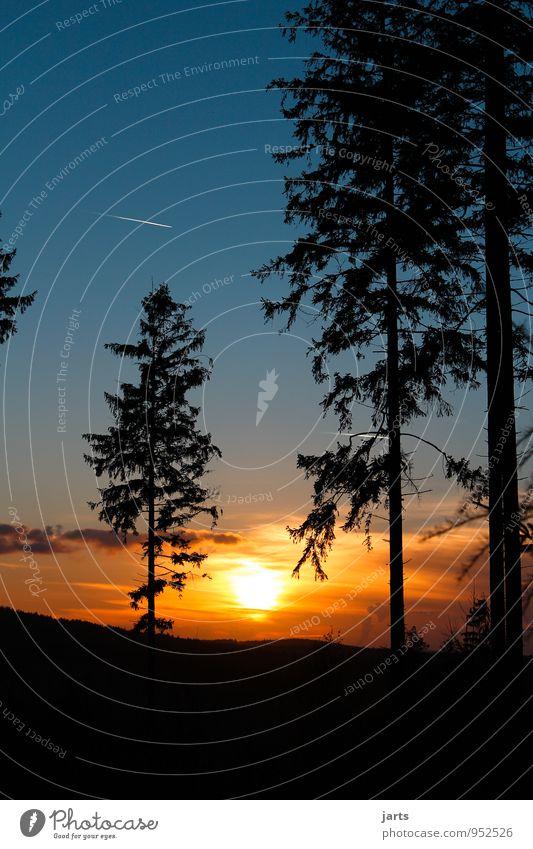bye bye Natur Landschaft Himmel Wolken Nachthimmel Sonnenaufgang Sonnenuntergang Mond Schönes Wetter Baum Wald Unendlichkeit natürlich Optimismus ruhig Hoffnung