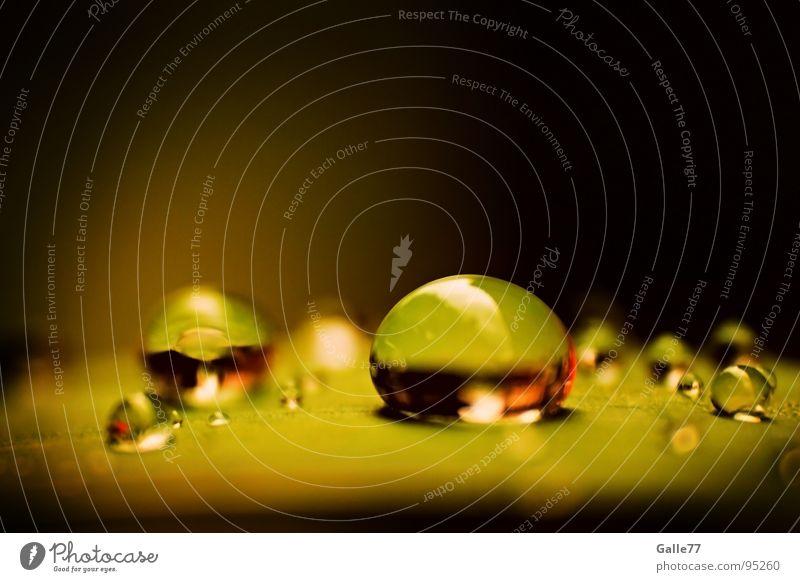 After rain III nass feucht Reflexion & Spiegelung nah grün rund Makroaufnahme Nahaufnahme Wassertropfen reflektion Elektrizität Natur drop Regen