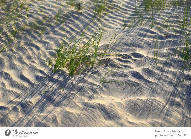 Kleine Halme = großer Schatten Ferien & Urlaub & Reisen Sommerurlaub Natur Landschaft Pflanze Tier Sand Sonnenaufgang Sonnenuntergang Schönes Wetter Gras