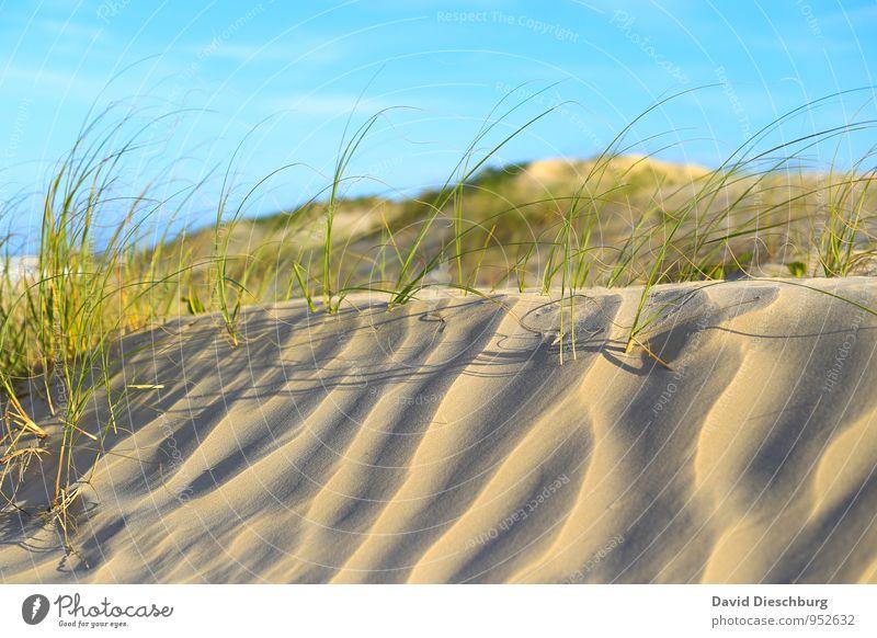 Dünenlandschaft Ferien & Urlaub & Reisen Sommerurlaub Landschaft Sand Himmel Sonnenaufgang Sonnenuntergang Schönes Wetter Pflanze Gras Grünpflanze Strand Wüste