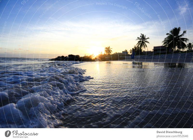 Romantische blaue Stunde Himmel Ferien & Urlaub & Reisen Pflanze weiß Wasser Sommer Erholung Meer Landschaft Wolken Ferne schwarz gelb Küste Horizont