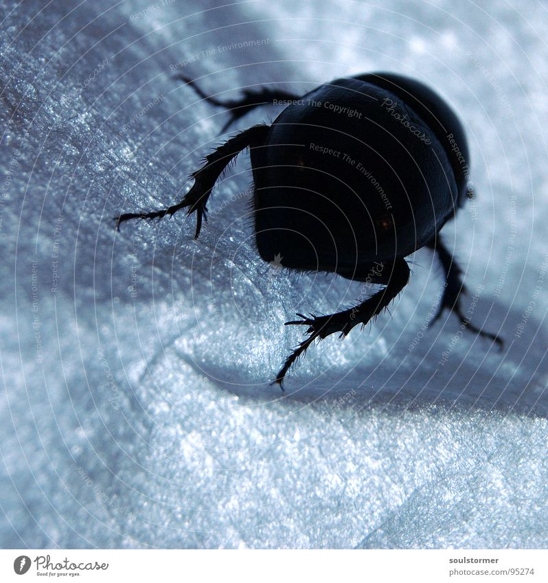 Panzers Hintern Insekt Flucht gepanzert Panik Papier Licht Gemälde Quadrat Faser Käfer laufen Beine Arme Makroaufnahme Nahaufnahme Flügel Angst Tuch Maserung
