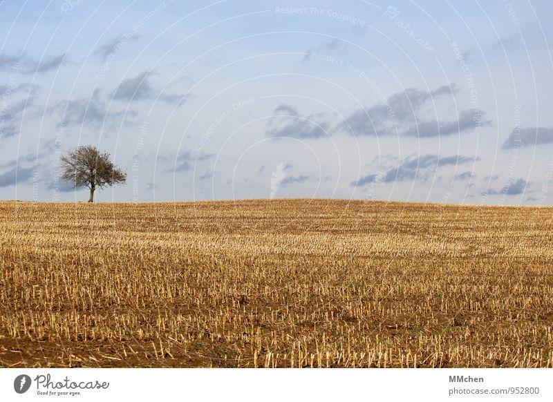 Blond Meditation Ausflug Freiheit Natur Landschaft Erde Himmel Wolken Herbst Baum Nutzpflanze Feld Wachstum warten trist blau gelb Vertrauen fleißig