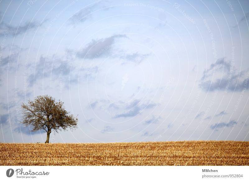 HerbstTag Meditation Ausflug Freiheit Natur Landschaft Erde Himmel Wolken Baum Nutzpflanze Feld Wachstum warten trist blau gelb Vertrauen fleißig Gelassenheit