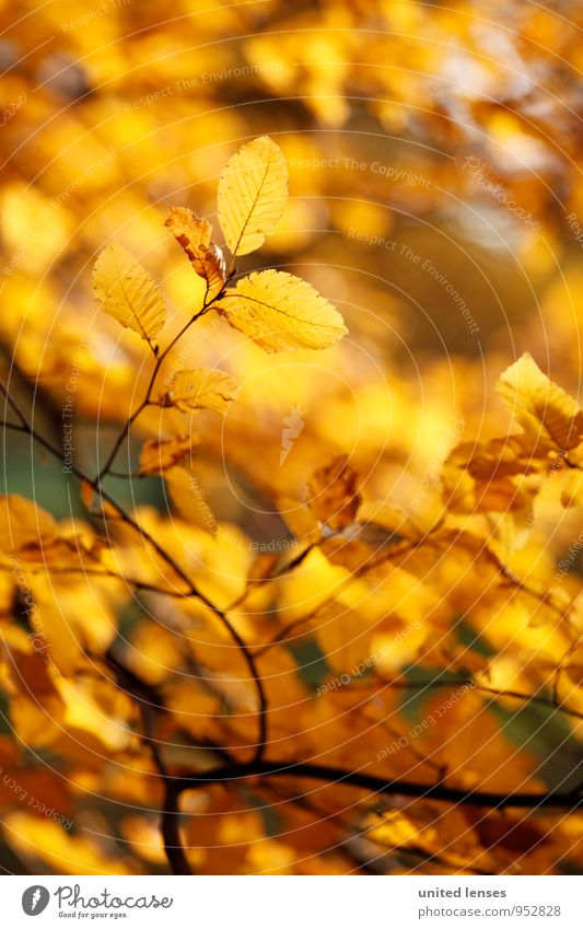 AK# Blattgold Sonne Baum Kunst Zufriedenheit ästhetisch Herbstlaub herbstlich Herbstfärbung Herbstbeginn Zweige u. Äste Herbstwald Herbstlandschaft gold-braun