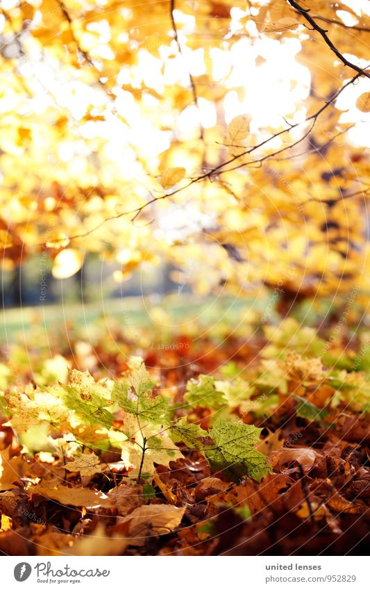 AK# Unterholz Natur Pflanze Blatt Landschaft Wald Umwelt Herbst Zufriedenheit ästhetisch Bodenbelag Herbstlaub herbstlich Herbstfärbung Herbstbeginn Waldboden
