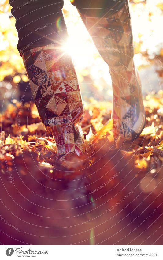 AK# Herbstmode Natur Pflanze Blatt Landschaft Umwelt Zufriedenheit laufen ästhetisch Spaziergang Herbstlaub herbstlich Herbstfärbung schreiten Gummistiefel