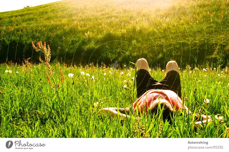 enjoy the sun Mensch Natur grün Pflanze Sonne Sommer Erwachsene Erholung Wiese Umwelt Landschaft Gras Wärme Beine Stimmung Wetter