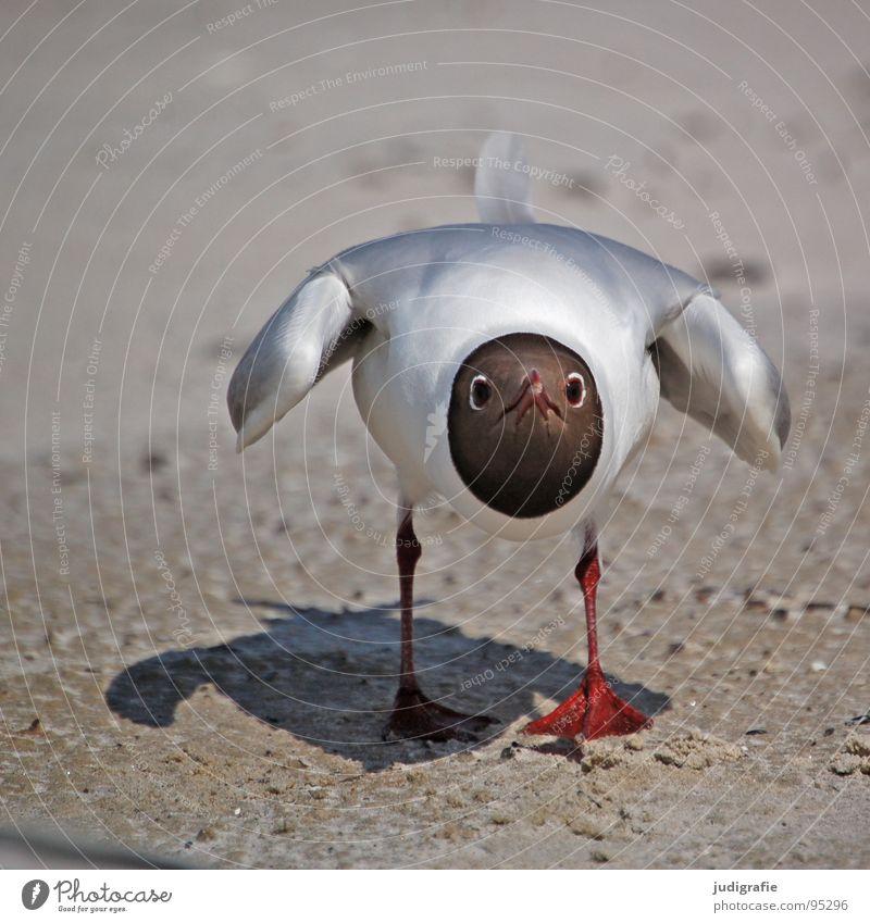 Angriff Natur Meer Sommer Strand Ferien & Urlaub & Reisen Tier Farbe See Sand Beine Vogel Küste Umwelt fliegen bedrohlich Feder