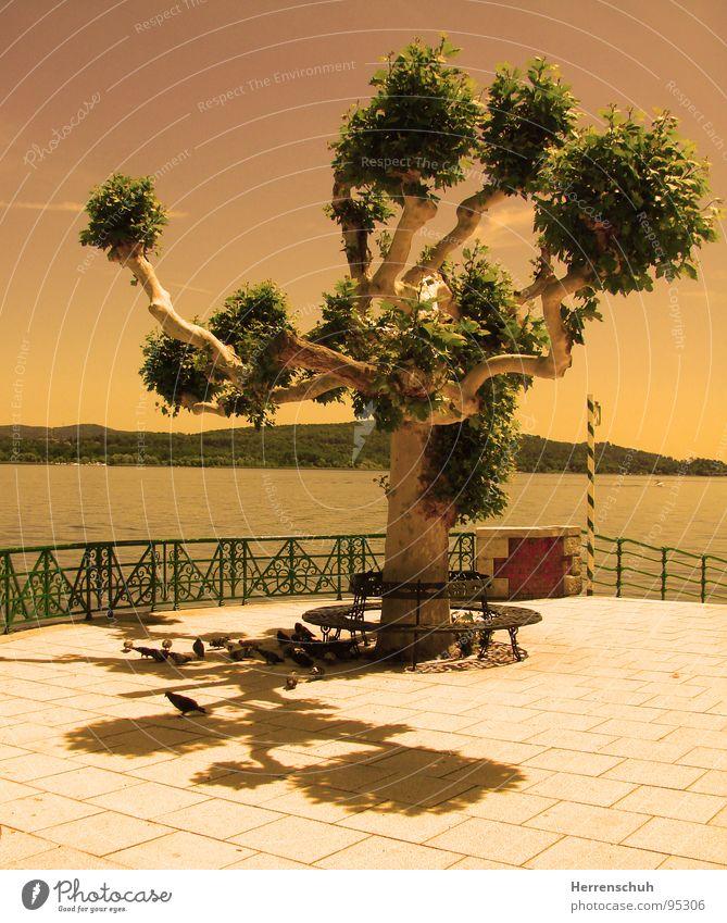 Monstrum am Abend Wasser Baum ruhig Erholung See Bank Italien Piemonte Taube Lago Maggiore