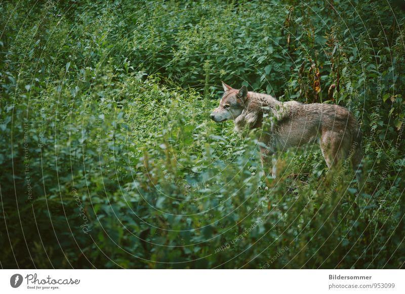 . Natur Pflanze grün Sommer Einsamkeit ruhig Tier Wald Wiese Gras braun wild Kraft Wildtier stehen beobachten