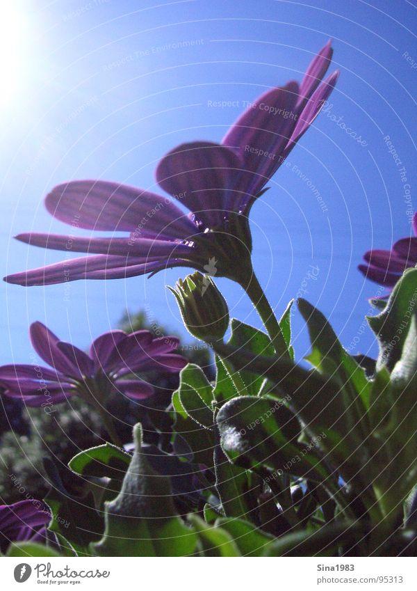 Der Sonne entgegen Natur schön Himmel Blume grün blau Pflanze Sommer Freude Wolken Tier Farbe Erholung Wiese oben