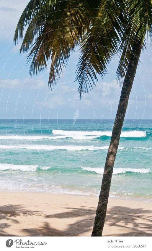 75° Ferien & Urlaub & Reisen Tourismus Ferne Freiheit Sommer Sommerurlaub Sonne Sonnenbad Strand Meer Insel Wellen Umwelt Natur Landschaft Pflanze Sonnenlicht