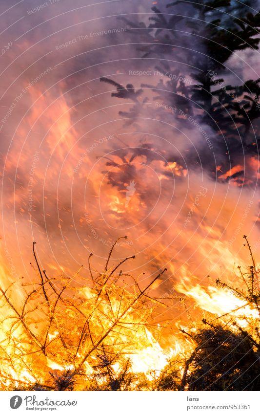 last Christmas ll Veranstaltung Feste & Feiern Weihnachten & Advent Feuer Baum Tanne außergewöhnlich heiß gelb orange rot schwarz Beginn anstrengen Bewegung
