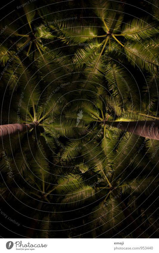 nachts Umwelt Natur Pflanze Baum Grünpflanze Palme Palmenwedel dunkel natürlich grün Farbfoto Außenaufnahme Strukturen & Formen Menschenleer Nacht Kunstlicht