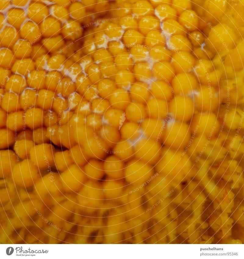 honney Natur Wasser Blume gelb Farbe Blüte nass Biene Material Pollen Staubfäden Nektar