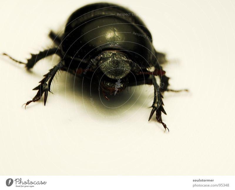 Panzers Fresse Insekt Flucht gepanzert Panik Papier Unschärfe Käfer laufen Beine Arme Makroaufnahme Nahaufnahme Flügel Angst Tuch
