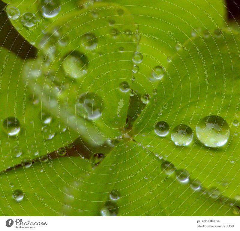 here comes the rain, again Natur Wasser grün Pflanze Glück Regen nass frisch durchsichtig Lupe Klee Kleeblatt