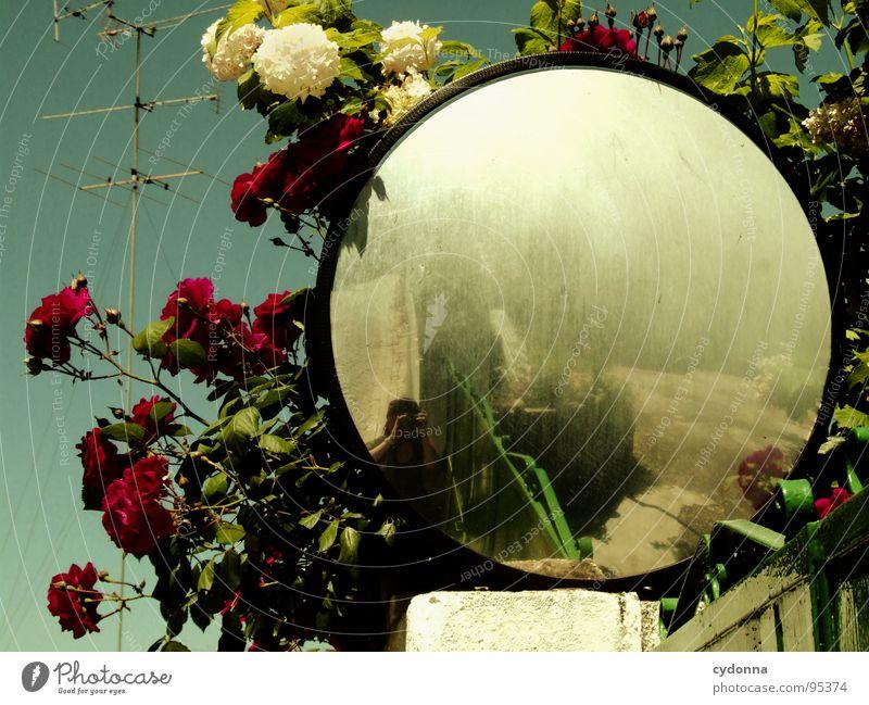 Come In And Find Me Himmel alt schön Ferien & Urlaub & Reisen Sommer Blume Leben außergewöhnlich Suche Häusliches Leben Wandel & Veränderung Romantik Neugier