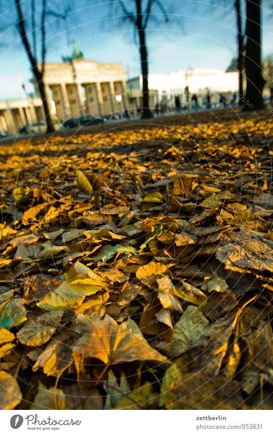 Brandenburger Tor Berlin Hauptstadt Regierungssitz Regierungspalast Deutscher Bundestag Wahrzeichen wallroth langhans Herbst Herbstlaub Blatt Sonne Oktober