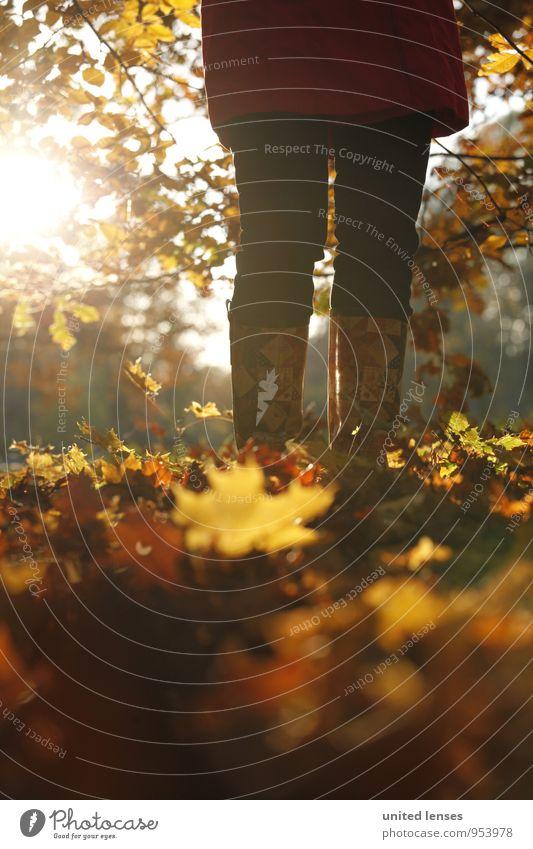 AK# Herbststand Natur Pflanze Blatt Landschaft Umwelt Zufriedenheit stehen ästhetisch Herbstlaub herbstlich Stiefel Herbstfärbung Herbstbeginn Blätterdach