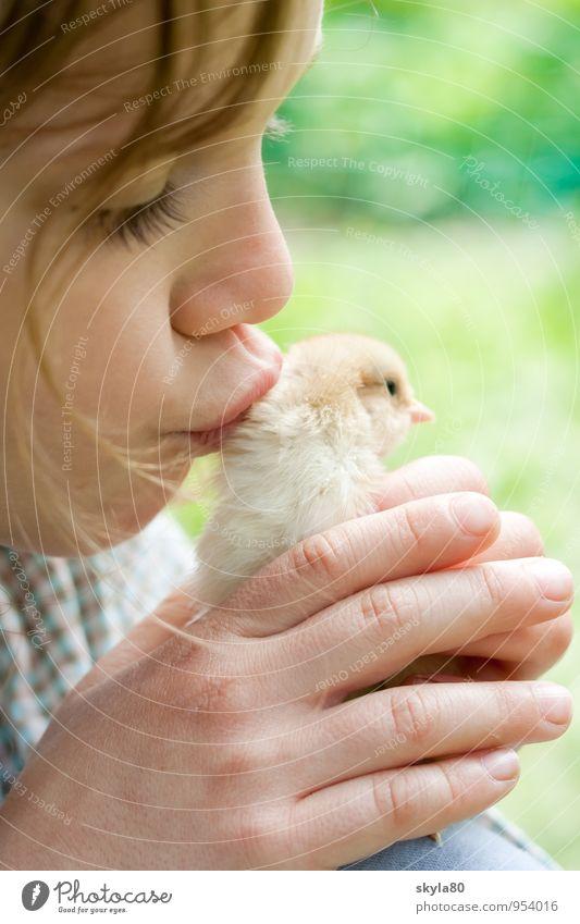 Tierliebe Mädchen Kind Freude Kindheit Kindheitserinnerung Haare & Frisuren Haushuhn Küken Küssen festhalten Sicherheit Geborgenheit Hand Wärme Warmherzigkeit