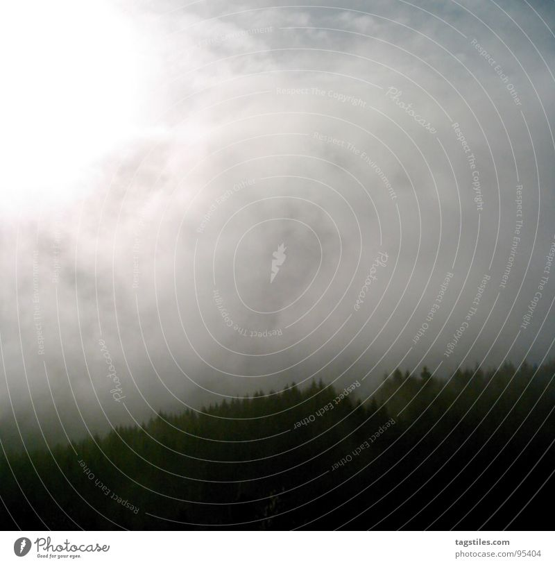 Nebel I Sonne Winter Wolken Wald Tanne Denkmal diffus Hermanns Denkmal Nebelbank Detmold