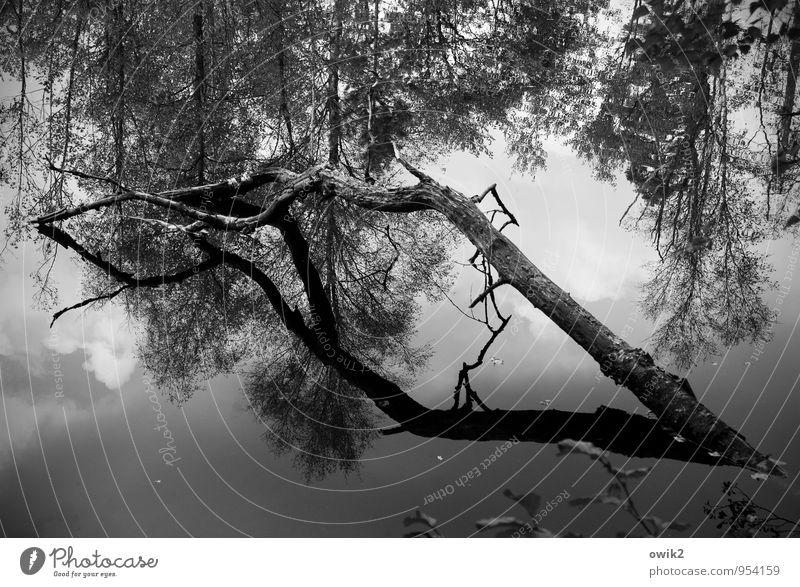 Seebestattung Umwelt Natur Landschaft Pflanze Wasser Himmel Wolken Schönes Wetter Baum Wildpflanze Ast Küste Teich Holz authentisch maritim natürlich trist