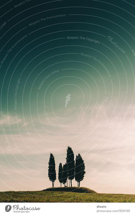Cypress Hill harmonisch Erholung ruhig Meditation Ferien & Urlaub & Reisen Tourismus Sommer Sommerurlaub Umwelt Natur Landschaft Pflanze Himmel Schönes Wetter
