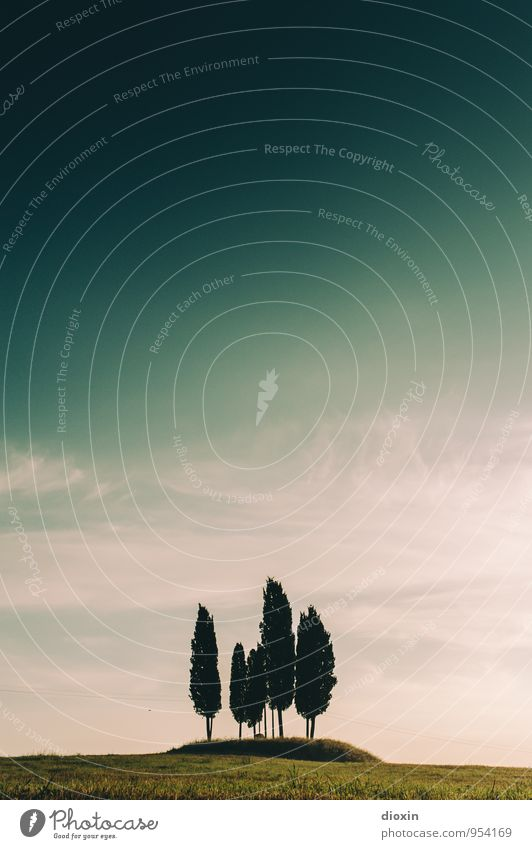 Cypress Hill Himmel Natur Ferien & Urlaub & Reisen Pflanze Sommer Baum Erholung Landschaft ruhig Umwelt Gras natürlich Tourismus Schönes Wetter Hügel