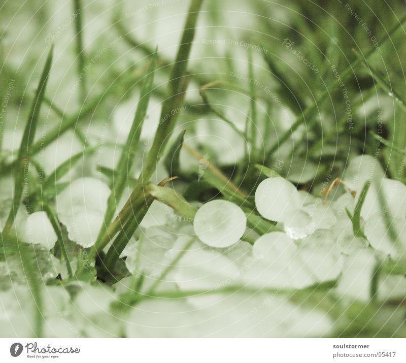 Hagel im Juni Natur weiß grün dunkel Schnee Wiese Gras Frühling Regen Eis Wetter nass Seil gefährlich Rasen bedrohlich