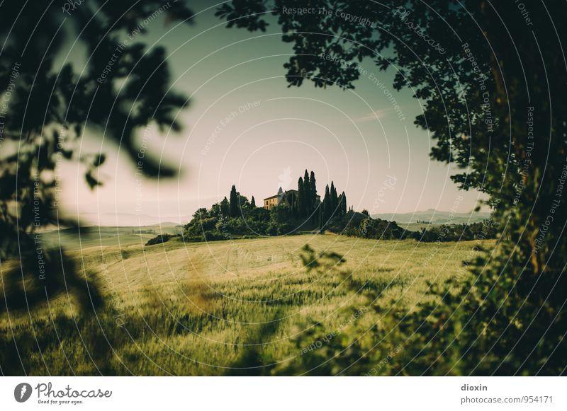 Tuscia {5} harmonisch Erholung ruhig Ferien & Urlaub & Reisen Tourismus Sommer Sommerurlaub Umwelt Natur Landschaft Himmel Pflanze Baum Zypresse Feld Hügel