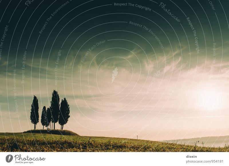 Cypress Hill [2] Himmel Natur Ferien & Urlaub & Reisen Pflanze Sommer Baum Erholung Landschaft ruhig Wolken Umwelt Wiese Gras natürlich Tourismus Schönes Wetter