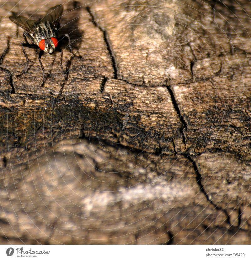 Tarnkappenbomber Auge Holz Fliege fliegen Flügel Insekt krabbeln rechnen Maserung Tarnung nervig Visier