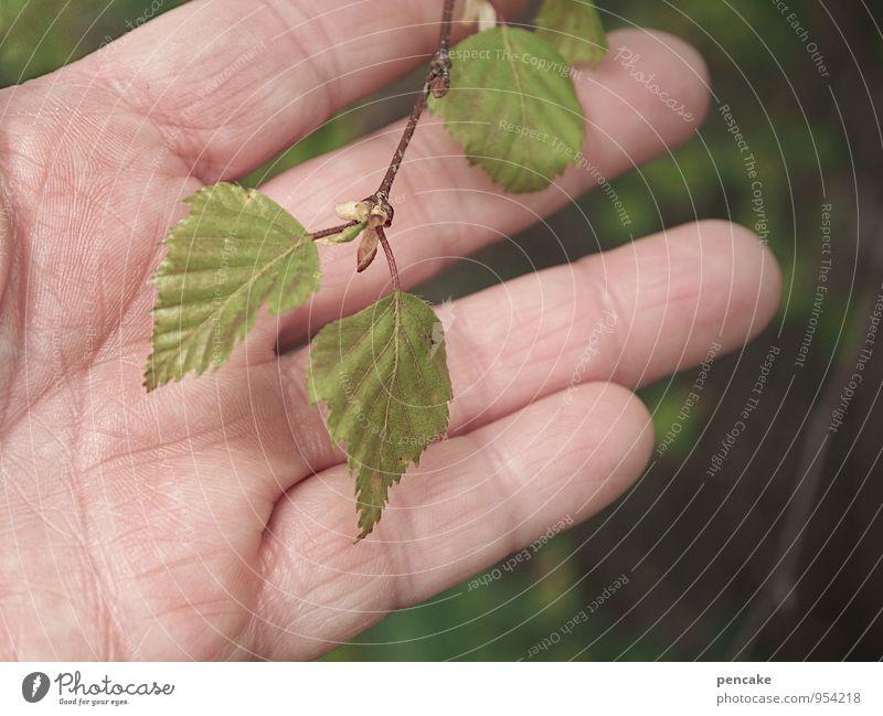 handverlesen Natur Pflanze grün Baum Hand Blatt Wald Frühling Gesundheit Finger Lebensfreude Zeichen Vorfreude Interesse Respekt Optimismus