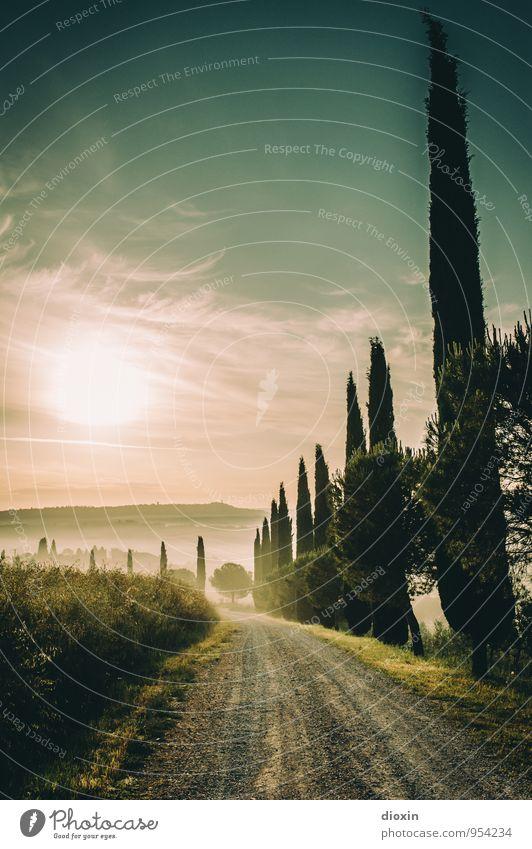 Tuscia {7} Natur Ferien & Urlaub & Reisen Pflanze Sommer Sonne Baum Erholung Landschaft ruhig Ferne Umwelt Wege & Pfade Tourismus wandern Schönes Wetter Fußweg