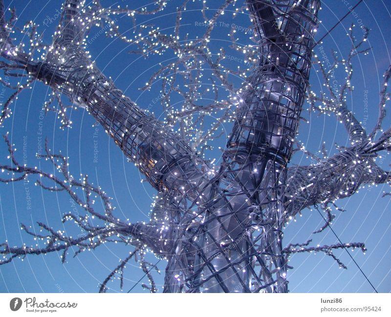 Binärbaum Baum Dämmerung Winter Leuchtdiode Himmel Abend Ast Baumstamm