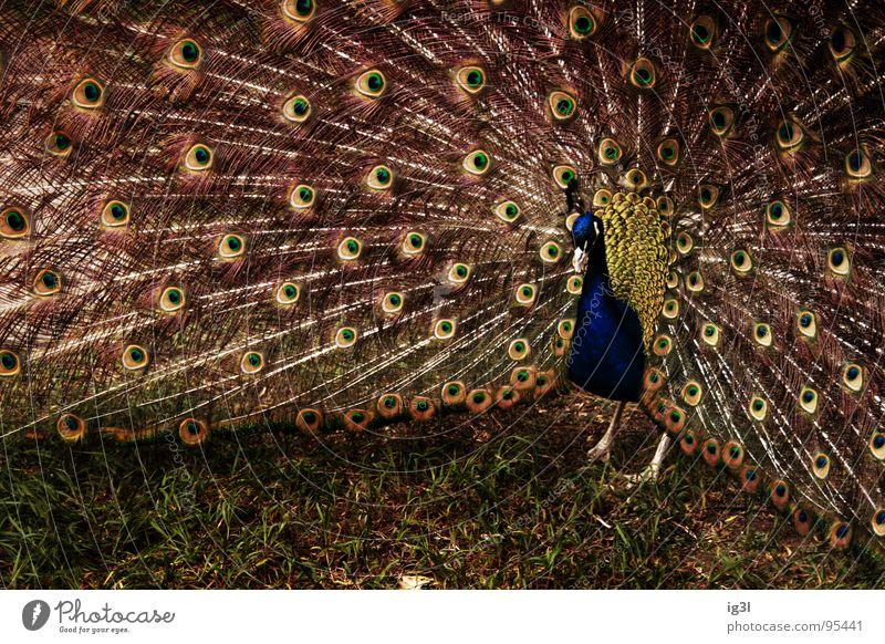 77 augen Natur grün blau schön rot Sommer Freude ruhig Einsamkeit Auge Tier Freiheit Gras Glück klein Lampe