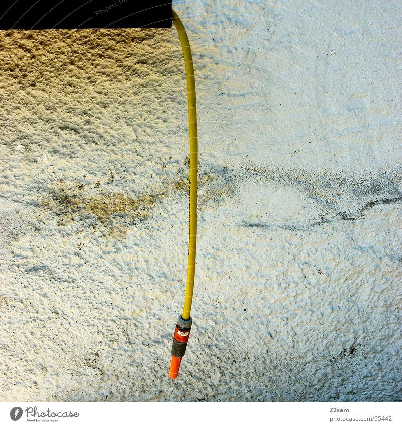 hang up Wasser Pflanze Sommer Blume gelb Erholung Wiese Wand Fenster Garten orange dreckig frisch Wachstum hängen spritzen