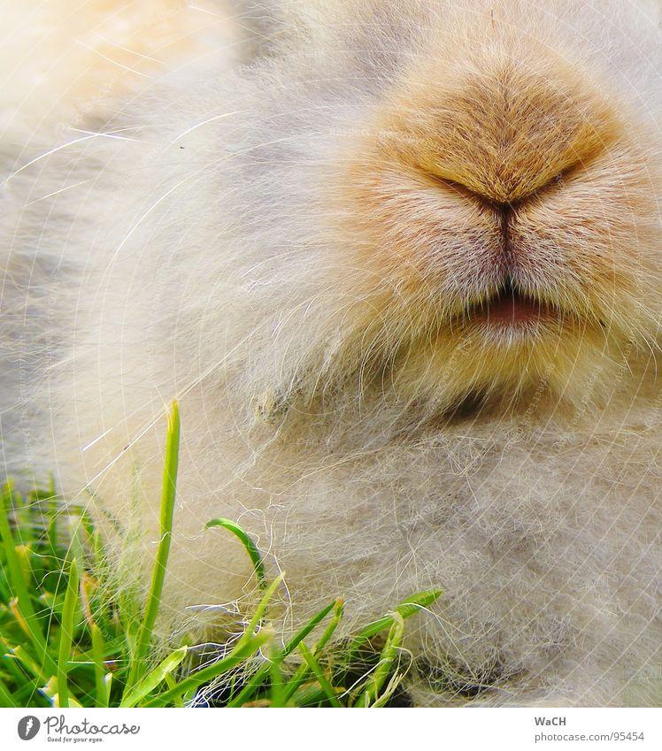 Mein Name ist Hase Mund Nase Rasen Fell Haustier Säugetier Hase & Kaninchen Schnauze Osterhase Tier Zwergkaninchen