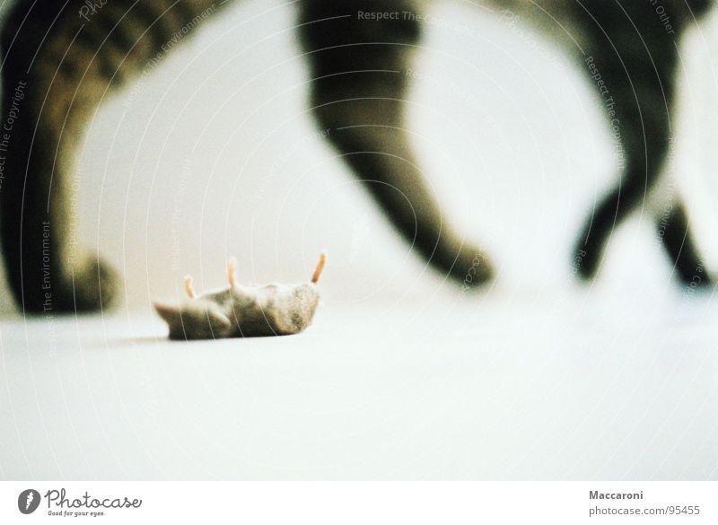 Mörder V Ernährung Büffet Brunch Rücken Bauch Fuß Fell Katze Maus Pfote laufen liegen grau weiß Tod Hintergrundbild Säugetier Angsthase töten Langeweile
