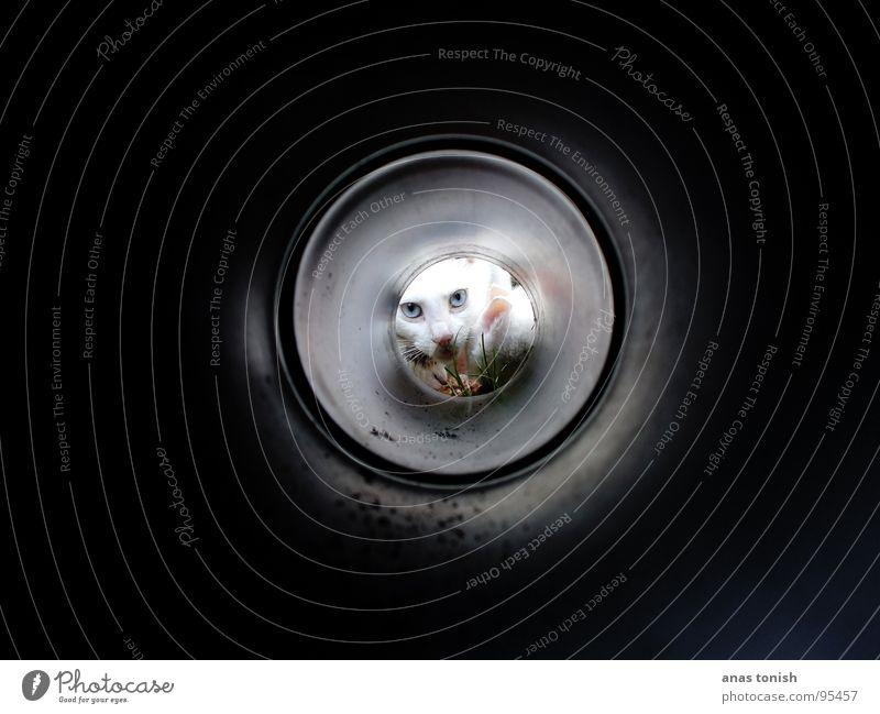 Isch Guck In Die Röhre Gras Halm Katze klein niedlich süß Fell gefangen verloren fixieren Tunnel Licht weiß Regenrinne Katzenfreund Säugetier Auge Angst